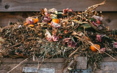 The Dirt On Compostable Packaging
